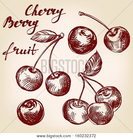 cherry set hand drawn vector llustration realistic sketch