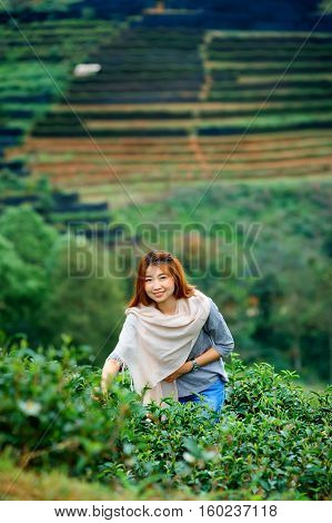 Asian Happy Woman Picking Tea Leaf In Field On Doi Angkhang Moun