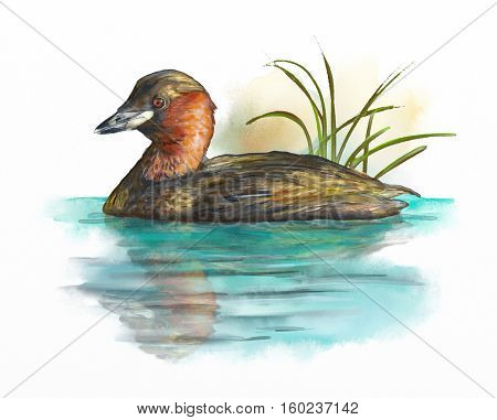 Wetland birds, little grebe. Digital watercolor.