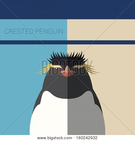 Vector image of the Crested Penguin flat postcard