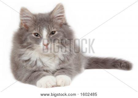 Tired Kitten 2