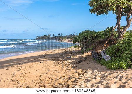 Vegetation along the Lihue coast in Kauai, Hawaii