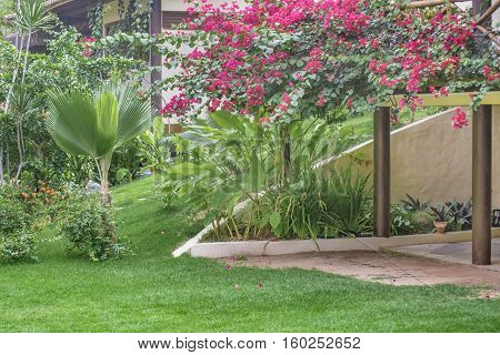 Beautiful landscaping garden at hotel yard located in Pipa Brazil