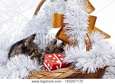 christmas cat with a christmas decorations and gifts