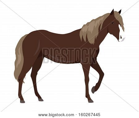 Sorrel horse with white muzzle vector. Flat design. Domestic animal. Country inhabitants concept. For farming, animal husbandry, horse sport illustrating. Agricultural species. Isolated on white