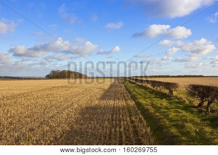 Hilltop Bridleway