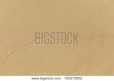 Wobbly line in soft sand, possibly created from an insect burrowing.
