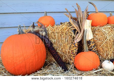 Picture of typical for Fall Holiday Thanksgiving and Harvest pumpkins and corn (maize) Bails of Hay arranged as decoration
