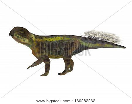 Psittacosaurus Dinosaur Side Profile 3D Illustration - Psittacosaurus was a Ceratopsian herbivorous dinosaur that lived in Asia in the Cretaceous Period.