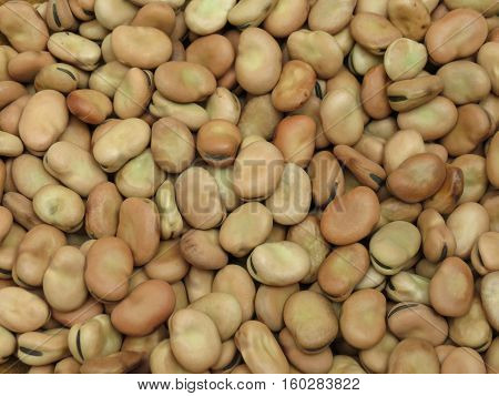 Broad Bean Background