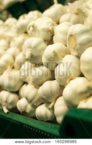 Background of garlic on the supermarket shelf. Close up. Fresh organic on shelf in supermarket. Healthy food concept. Vitamins.