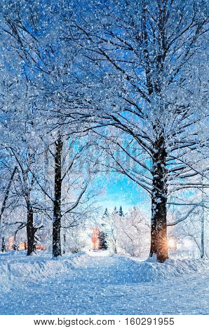 Winter landscape - winter night park alley with row of winter frosty trees under falling snow in the city. Winter landscape night scene - winter deserted snowy walkway with winter snowfall and winter snowy trees in the night
