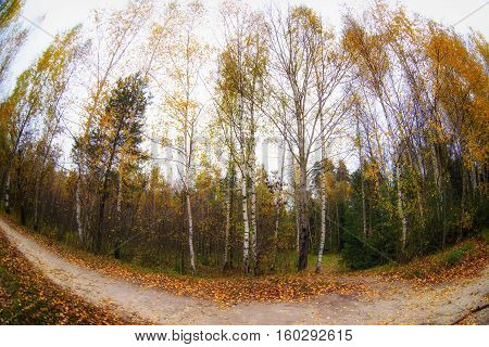 Trees in the autumn forest. Fall woods. Rich colors. fisheye lens
