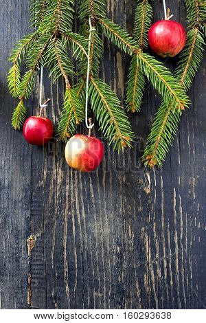 Christmas still life with apples and fir tree branch
