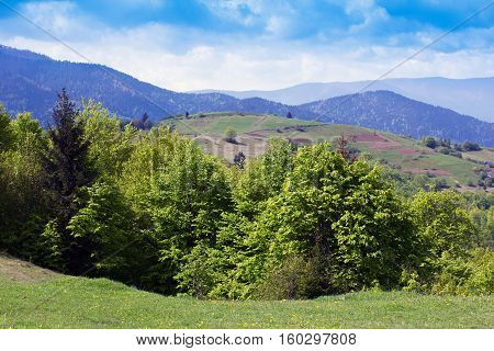 landscape consisting of a grassy valley with green trees on the foreground and Carpathians mountains with fir-tree and green trees in the middle of the image and blue sky with clouds on the background
