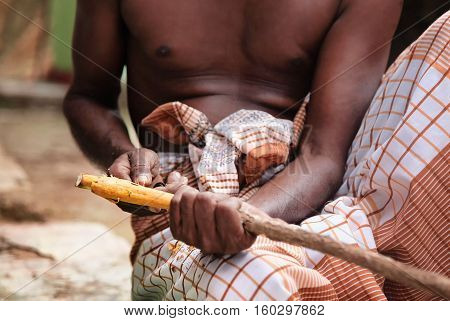 Tradition hand production of cinnamon sticks. Sri Lankan man manually peels the bark of harvested cinnamon wood. Sri Lankan man man performs a method of manual production of cinnamon. He is holding cinnamon stick and peeling it with special knive.