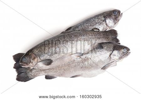 Gutted trout fishes isolated on white background