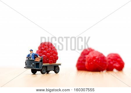 Miniature Farmer carrying red raspberries. Macro photo