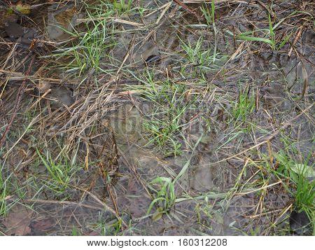 Wet Land Marsh