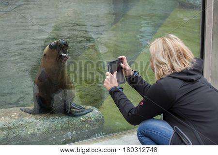 MUNICH, GERMANY - JUNE 13, 2016: Visitor taking pictures as the newborn South American sea lion (Otaria flavescens) yawns at Hellabrunn Zoo in Munich, Bavaria, Germany.