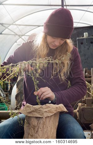 Girl In Hat Picks Organic Herbs And Produce Into Bag