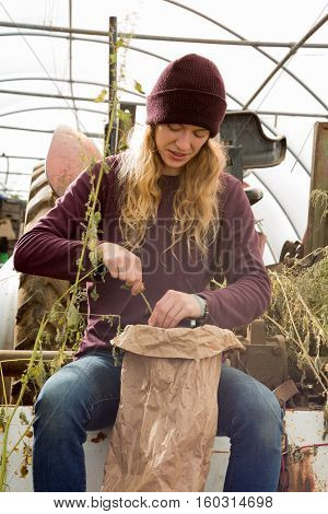 Woman Harvesting Dried Herbs And Into Huge Paper Bag