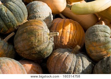 Pile Of Mouldy Rotting Pumpkins And Butternut Squash