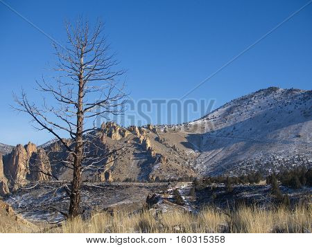 A lone bare tree with a jagged hill in the background at Smith Rocks State Park on a sunny winter morning with a light dusting of snow on the ground.