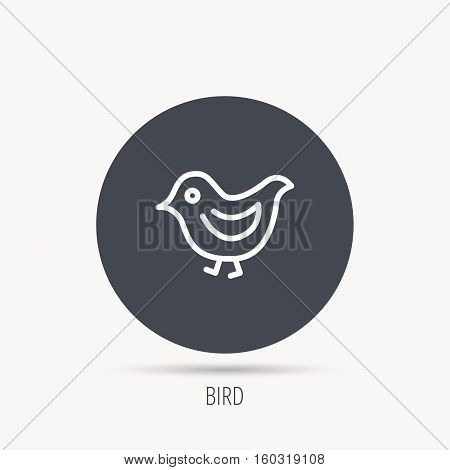 Bird icon. Chick with beak sign. Fowl with wings symbol. Round web button with flat icon. Vector