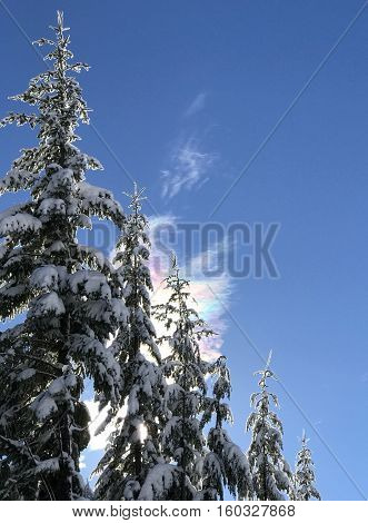 The sun creates a rainbow of colors in a cloud and illuminates the snow covered branches of fir trees in the Willamette National Forest in Oregon on a winter day.