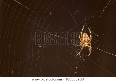 macro big spider on the web in a dark place