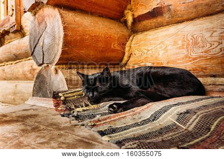 Beautiful black cat resting on a doormat in the corner near the wooden wall