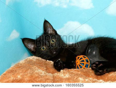 Portrait of a black kitten with yellow green eyes laying on caramel colored fur bed playing with plastic ball toy looking directly at viewer. Blue background sky with clouds. Copy space.