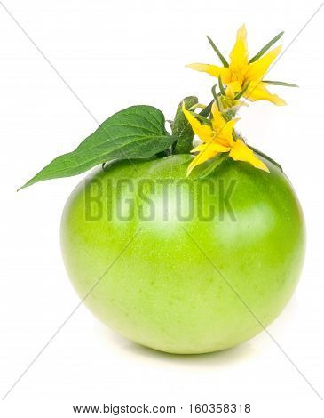 one green unripe tomato with a flower and leaf isolated on white background.