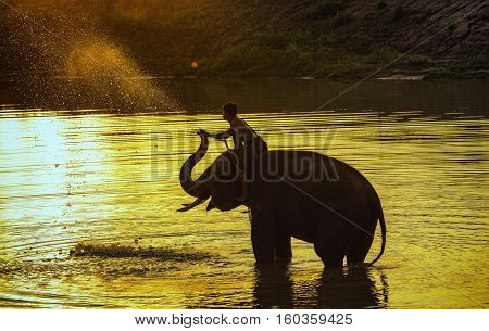 elephant playing in the river ,thailand elephant.