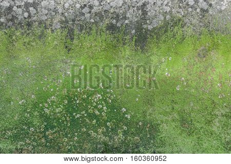 Old cracked decay wall background covered in green moss and mold