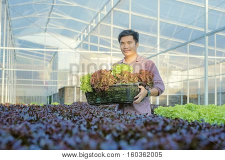 Hydroponic, Organic, Vegetable,