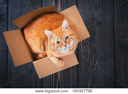Cute red cat in a cardboard box on a background of wooden planks close up.