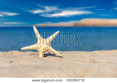 The starfish on the beach with white sand close-up