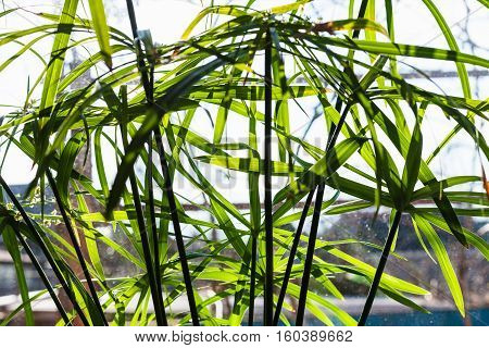 Green Blade Leaves Of Houseplant