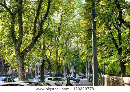 Green Street In Bologna City