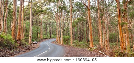 The Caves Road winds through the Boranup Karee Forest near the town of Margaret River Western Australia.