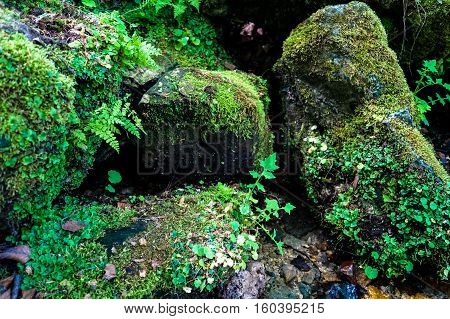 huge rocks in the forest, overgrown with moss
