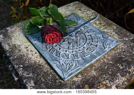 Wilting deep red rose lying on a weathered sundial lit against a dark background