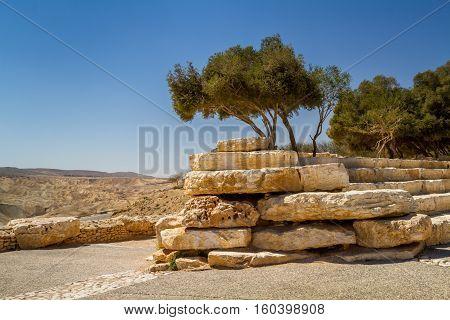 Trees on a stones part of the garden in Midreshet Ben-Gurion Ben Gurion national park next to kibbutz Sde Boker in the Negev desert Israel