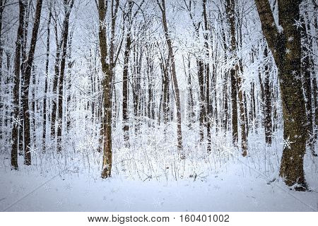 winter forest trees. nature snow wood backgrounds.