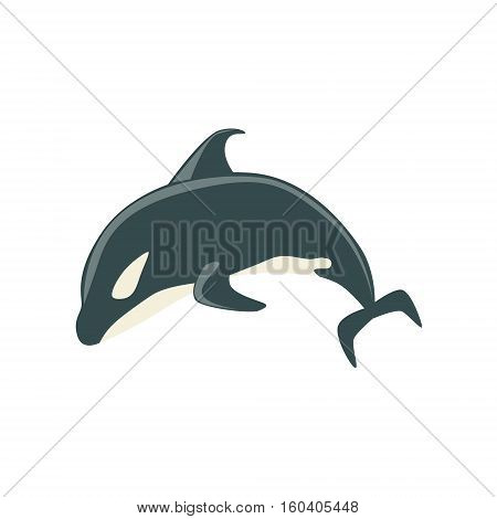 Orca Black And White Arctic Killer Whale Swimming, Realistic Aquatic Mammal Vector Drawing. Marine Animal In Characteristic Body Position Cartoon Illustration.