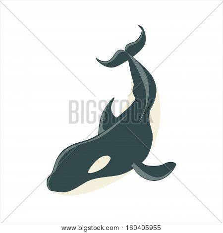 Orca Black And White Arctic Killer Whale, Realistic Aquatic Mammal Vector Drawing. Marine Animal In Characteristic Body Position Cartoon Illustration.