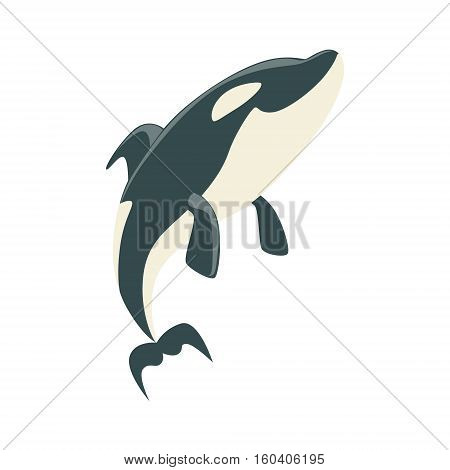 Orca Black And White Arctic Killer Whale Asking For Food, Realistic Aquatic Mammal Vector Drawing. Marine Animal In Characteristic Body Position Cartoon Illustration.