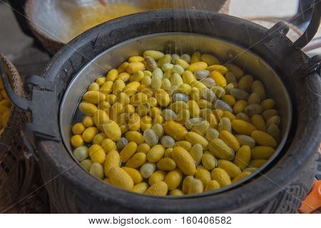 Beautiful yellow color Boiling cocoon silkworm in a pot.